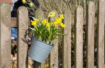 Pflanzenbehälter mit Osterglocken hängend an einem Zaun