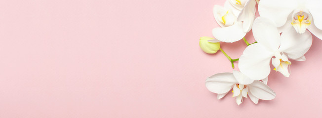 Beautiful White Phalaenopsis orchid flowers on pastel pink background top view flat lay. Tropical...