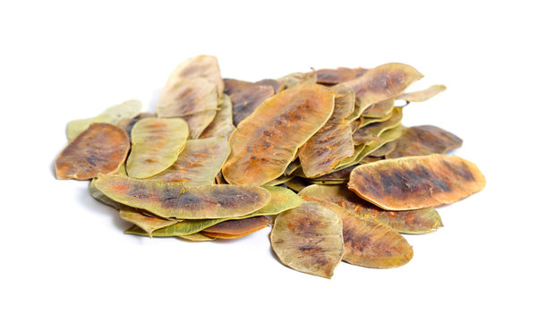 Alexandrina senna pods. Cassia senna, Egyptian senna, Tinnevelly senna, East Indian senna isolated on white background