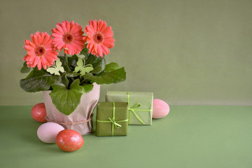 Coral gerbera daisy flowers and Easter eggs on green paper background, copy-space