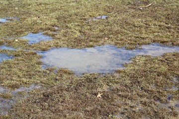 A close view of the water puddle in the green grass.