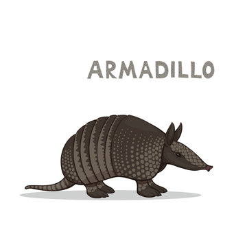 Vector illustration, a cartoon armadillo, isolated on a white background. Animal alphabet.