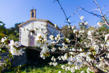 Cherry tree in bloom in Vall de Laguar, Spain. A small hermitage in the background