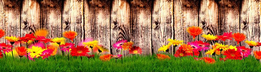 Hintergrund Banner Zaun mit Wiese und Blüten Gerberas