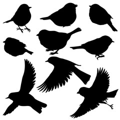 vector silhouettes of birds