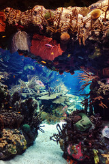 aquarium with fishes, for background