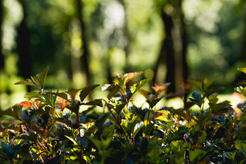 selective focus of green leaves on trees in peaceful park