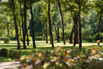 selective focus of trees with green leaves in tranquil park