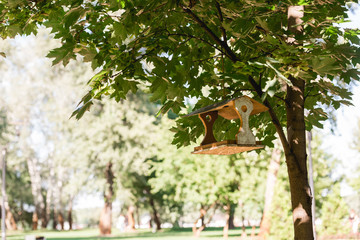 sunshine on tree with green leaves and wooden bird feeder
