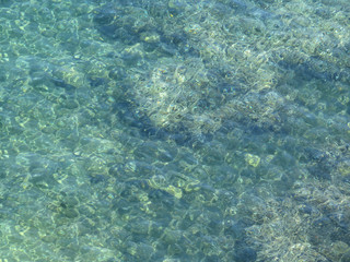 Clear sea water texture, top view of the rocky bottom. Transparent tropical ocean, coral reefs, abstract green water surface background