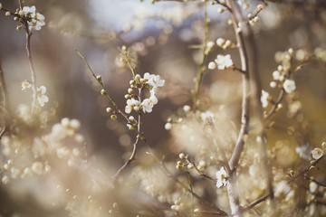 flowers on the trees bloom in the spring.