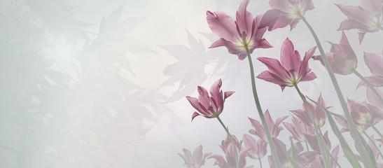 Trauer Hintergrund für Beileidskarte mit zarten Tulpen, Licht in den Ahornblättern