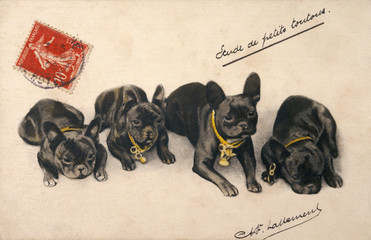 Four French Bulldogs