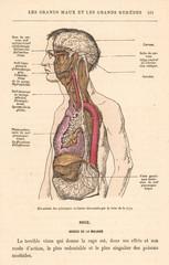 Symptoms of Rabies 1870