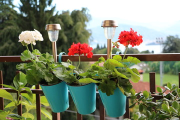 Solar lights and flowers of geraniums on the balcony