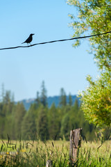 Bird perching on wire against blue sky