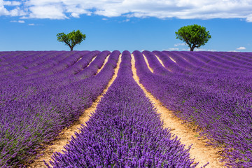 Photo sur Aluminium Prune Provence, France. Valensole plateau.