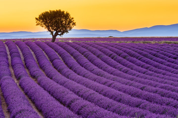 Poster Lavender Provence, France. Valensole plateau at sunset.