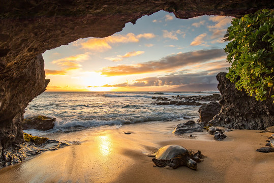 Turtles in a Cave