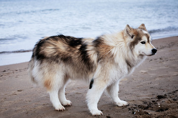 dog standing on the beach, baltic sea