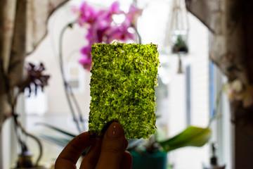 Seaweed in the Window light