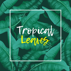 Tropical Banana leaves green