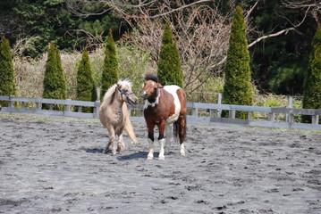 馬のデート