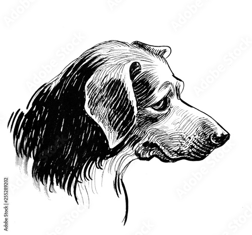 Sad looking dog head  Ink black and white drawing