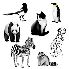 Black and White Animals Set of drawings of animals having a black and white color. Illustration, vector. EPS-10.