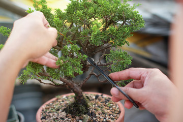 Foto op Plexiglas Bonsai Making of bonsai trees. Handmade accessories wire and scissor bonsai, bonsai tools, stand of bonsai.