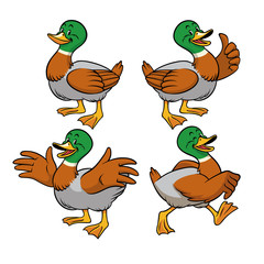 mallard duck with cartoon style