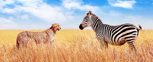Wall Mural - Zebra and cheetah in the African savannah. Serengeti National Park. Africa. Tanzania. Banner design.