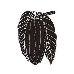 カカオの実と葉