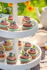 Homemade brown cupcake made of cream and fresh berries