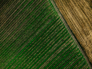 Symmetry patterns at farming fields,drone view from above