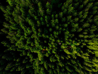 Magic woodland or forest at spring from above