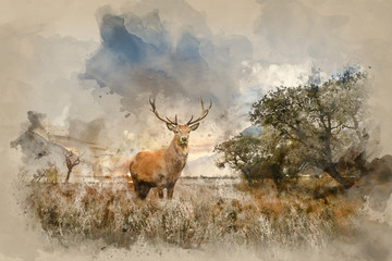 Powerful red deer stag in countryside landscape scene looking out into distance contemplation concept image