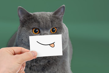 Funny cat portrait with smile and tongue