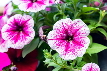 Background of close-up flowers