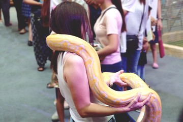 Albino python on asian woman at day trip