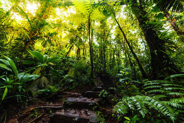 Stone steps in the Basse Terre jungle in Guadeloupe
