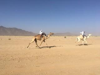 Course de chameaux dans le désert de l'Aïr, Niger