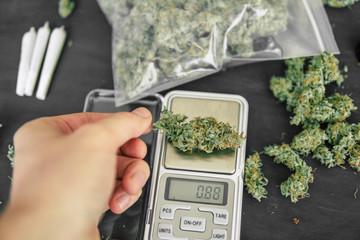 A drug dealer weighs cannabis flower marijuana