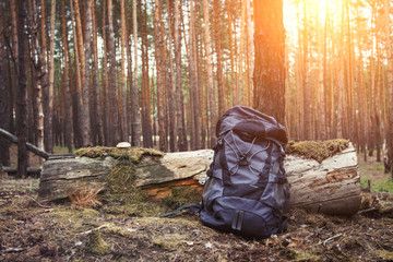 Tourist backpack is standing by a tree in the forest. Concept of a hiking trip to the forest or mountains. Survival in the wild