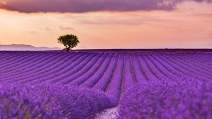Photo sur Toile Lavande Panoramic view of French lavender field at sunset. Sunset over a violet lavender field in Provence, France, Valensole. Summer nature landscape