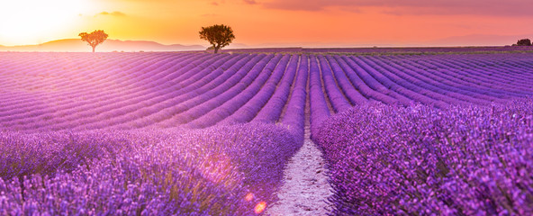 Poster Lavande Stunning landscape with lavender field at sunset. Blooming violet fragrant lavender flowers with sun rays with warm sunset sky.
