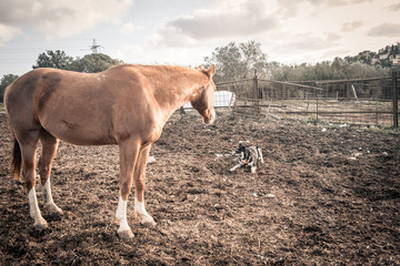 brown horse looking at a dog in the field