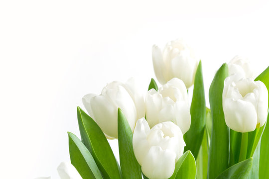 Bouquet of white tulip on white. Floral pattern. Space for text.