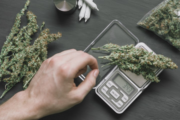A drug dealer weighs cannabis weed