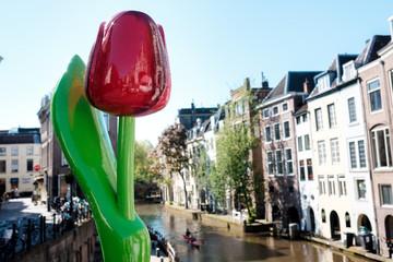 Aluminium Prints Tulip Utrecht